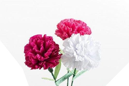 گل میخک| فراری از هیاهو هستید و دنبال آرامش