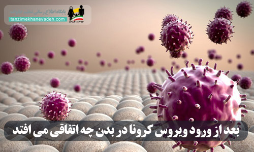 بعد از ورود ویروس کرونا در بدن چه اتفاقی می افتد