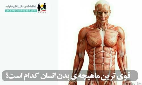 قوی ترین ماهیچه ی بدن انسان کدام است؟